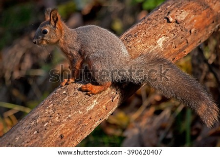 X-crossing of squirrel with a tree - stock photo