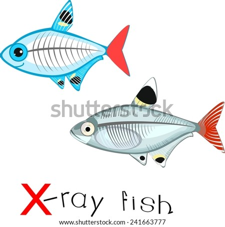 X ray fish stock photos images pictures shutterstock for X ray fish
