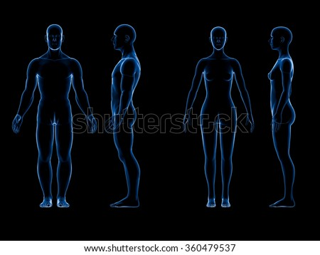 X ray human male female body. Anatomy concept. Isolate, 3d render. - stock photo