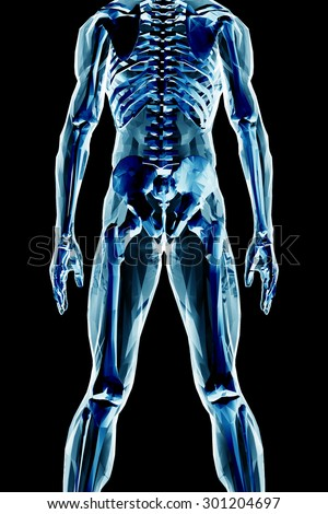 x-ray skeleton  - stock photo