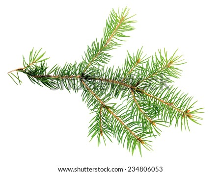 xmas branch of evergreen is isolated on white background - stock photo
