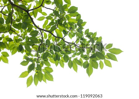 XXXL: isolated Green leaf on white background - stock photo