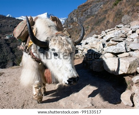 Yak in way to everest base camp - Nepal - stock photo