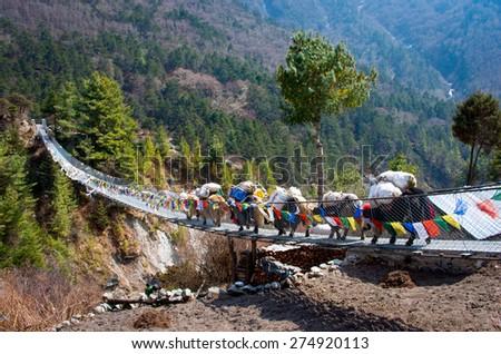 Yak on the bridge near Everest Base Camp in Nepal  - stock photo