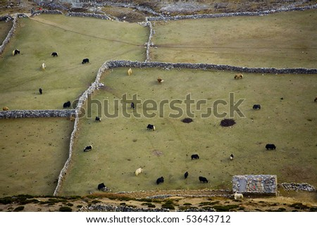 Yaks walk on brightly green grass in a beautiful shelter (a view from a mountain ridge) - stock photo