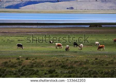 Yamdrok Lake, Tibet, China - stock photo