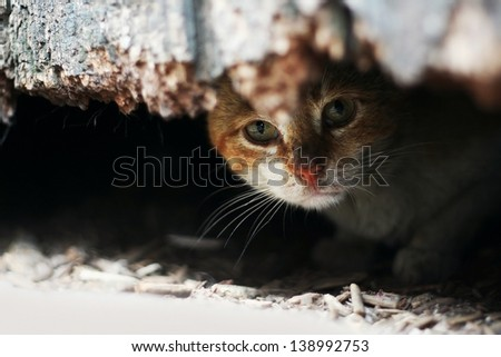 Yard cat in abandoned house - stock photo