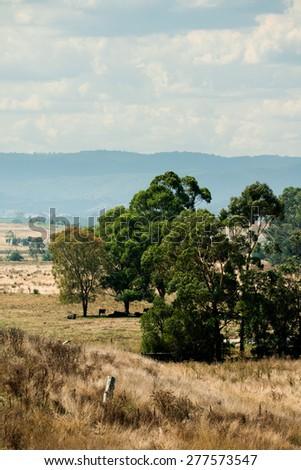 Yarra Valley scene in Victoria, Australia - stock photo