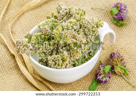 Yarrow in white bowl on rustic jute fabric   - stock photo