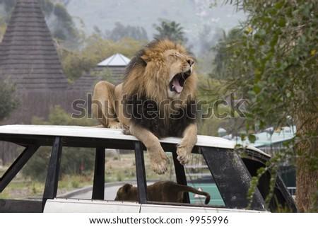 Yawn - stock photo