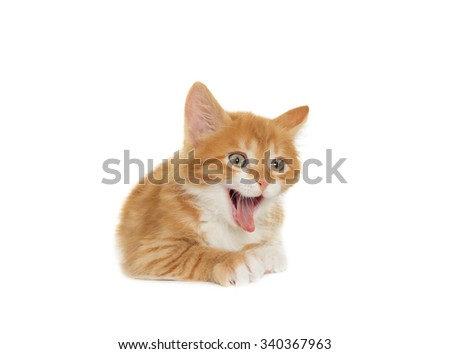 yawning kitten on a white background - stock photo