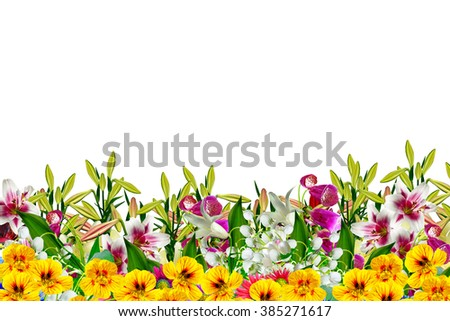 Yellow and pink flowers isolated on white background. - stock photo
