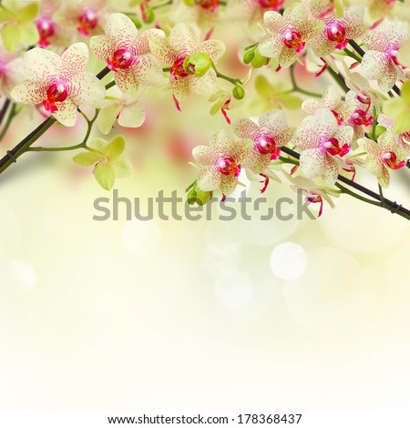 yellow and red orchid flowers on defocused background - stock photo
