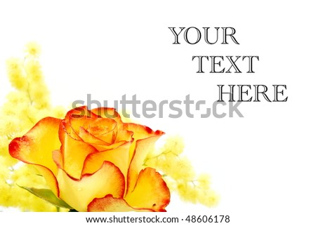 Yellow and red rose photographed on white background - stock photo