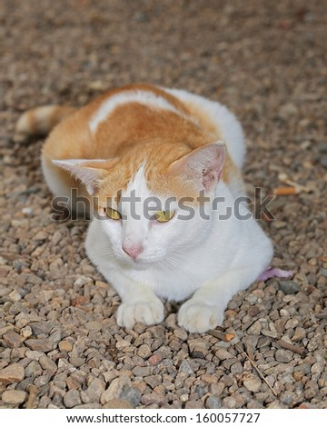 Yellow and white cat photos. - stock photo