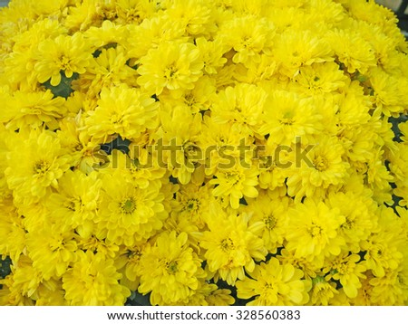 Yellow aster flowers background             - stock photo