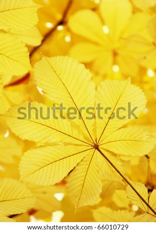 Yellow autumn leaves on a branch of a tree - stock photo