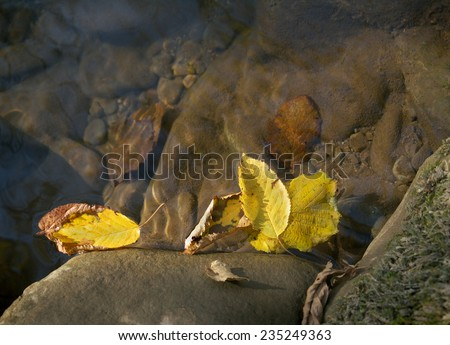 yellow autumn leaves on the surface of the creek  - stock photo
