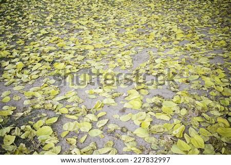 Yellow autumn leaves on urban land, nature - stock photo