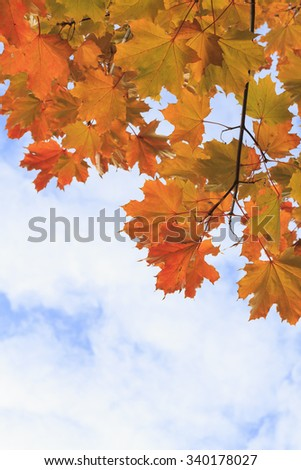 Yellow autumn maple leaves against the sky - stock photo