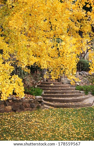 Yellow autumn tree in garden with stone steps - stock photo