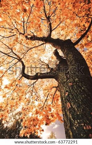 Yellow autumn tree. Sunny fall day under a tree - stock photo