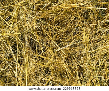 yellow background of straw. - stock photo