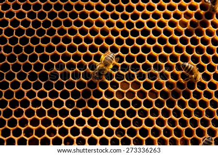 Yellow beautiful honeycomb with honey and close up view of the working bees on honeycomb.  - stock photo