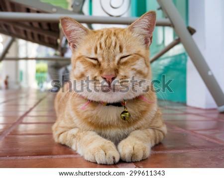 Yellow bengal cat are sleeping on the ground. - stock photo