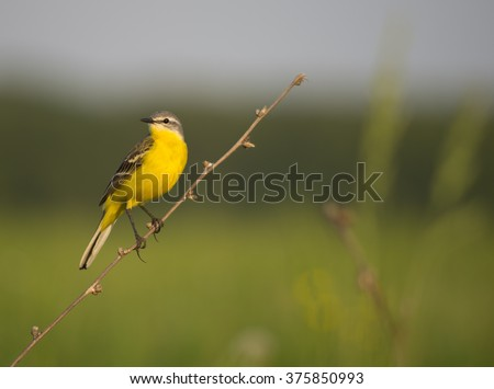 Yellow bird sitting on a branch - stock photo
