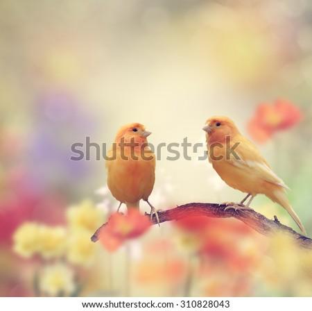Yellow Birds Perching In The Garden - stock photo