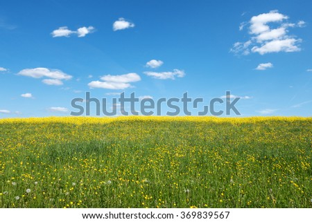 Yellow blooming, wild spring meadow with behind rape field and a blue and white sky  - stock photo