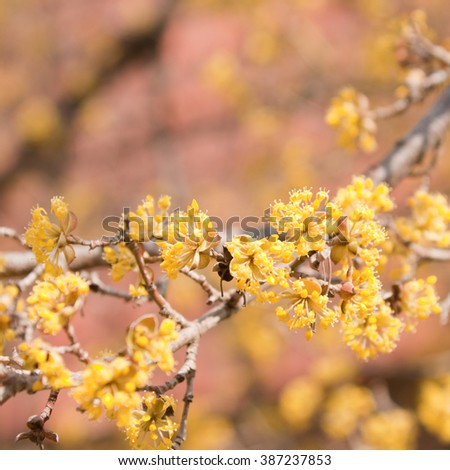 Yellow blossom close-up. Shallow depth of field. - stock photo