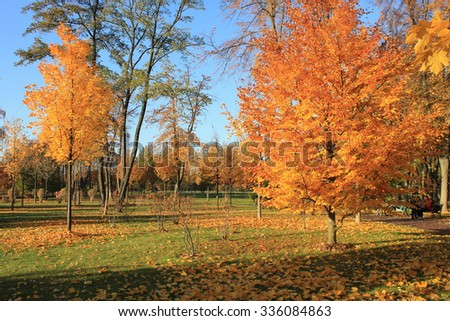 yellow bright  trees on blue sky in autumn park, selective focus - stock photo