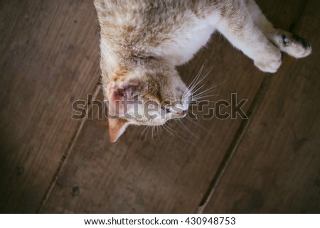 Yellow brown cat lying down on the wood planks floor. Relaxing sleeping cat. Up side down sleepy cat. Lifestyle photography - stock photo