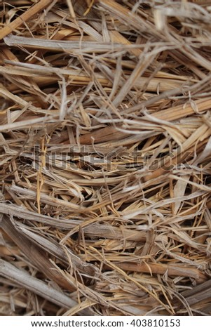 yellow brown dried grass hay straw close-up  - stock photo