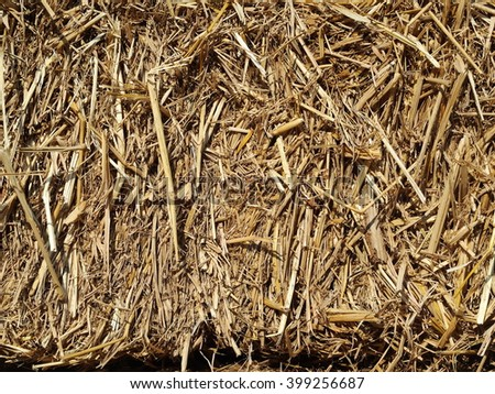yellow brown dried grass hay straw close-up under natural sunlight in an organic farm - stock photo