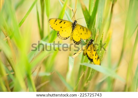 Yellow butterfly in green field - stock photo