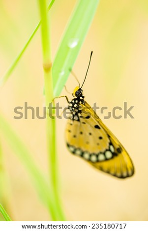 Yellow butterfly on green grass  - stock photo