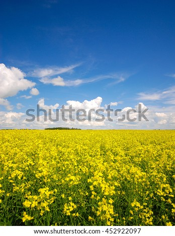 Yellow canola field and blue skies in the countryside in Alberta. - stock photo