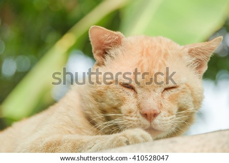 Yellow cat lying on the blister  - stock photo