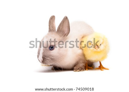 Yellow chick and bunny - stock photo