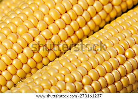 Yellow corn background - stock photo