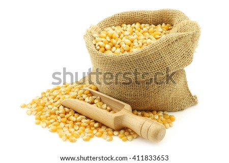 yellow corn grain in a burlap bag with a wooden scoop on a white background - stock photo