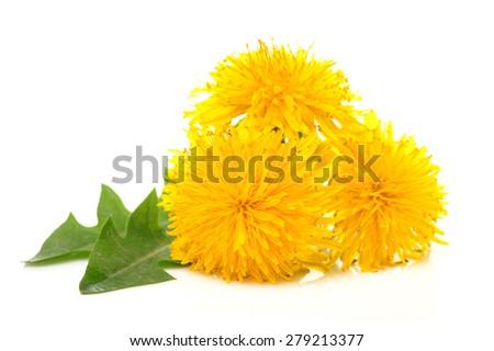 Yellow dandelion flower - stock photo