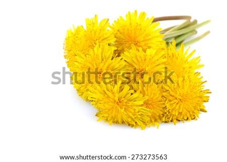 Yellow Dandelion isolated  - stock photo