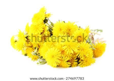 Yellow dandelion isolated on white - stock photo