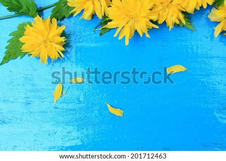 Yellow dandelion on blue wooden background, beautiful frame - stock photo