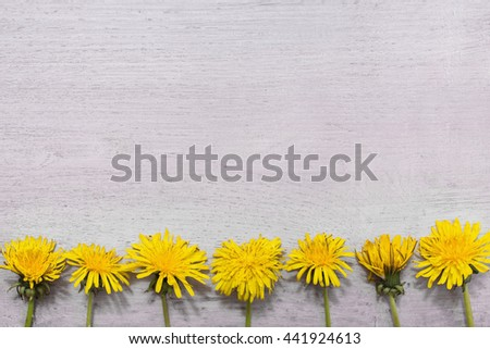 yellow dandelions lying on the wooden background, yellow summer flowers frame of flowers, copyspace - stock photo