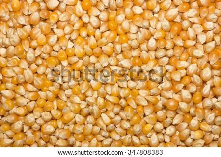 Yellow dry raw popcorn texture background - stock photo